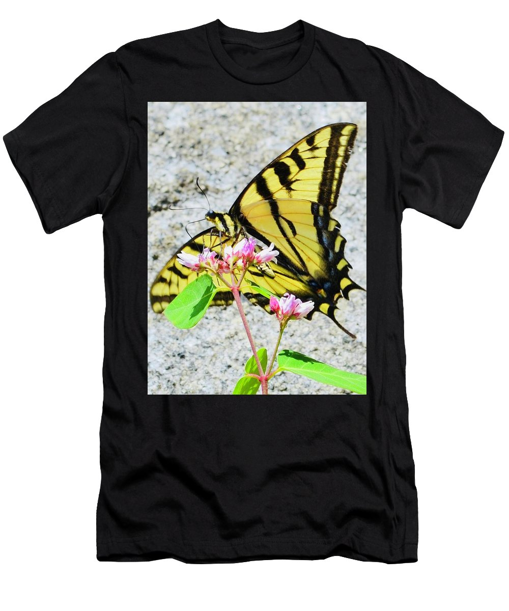 Anise Swallowtail Men's T-Shirt (Athletic Fit) featuring the photograph Perched Papilio by Daniel Jaquez