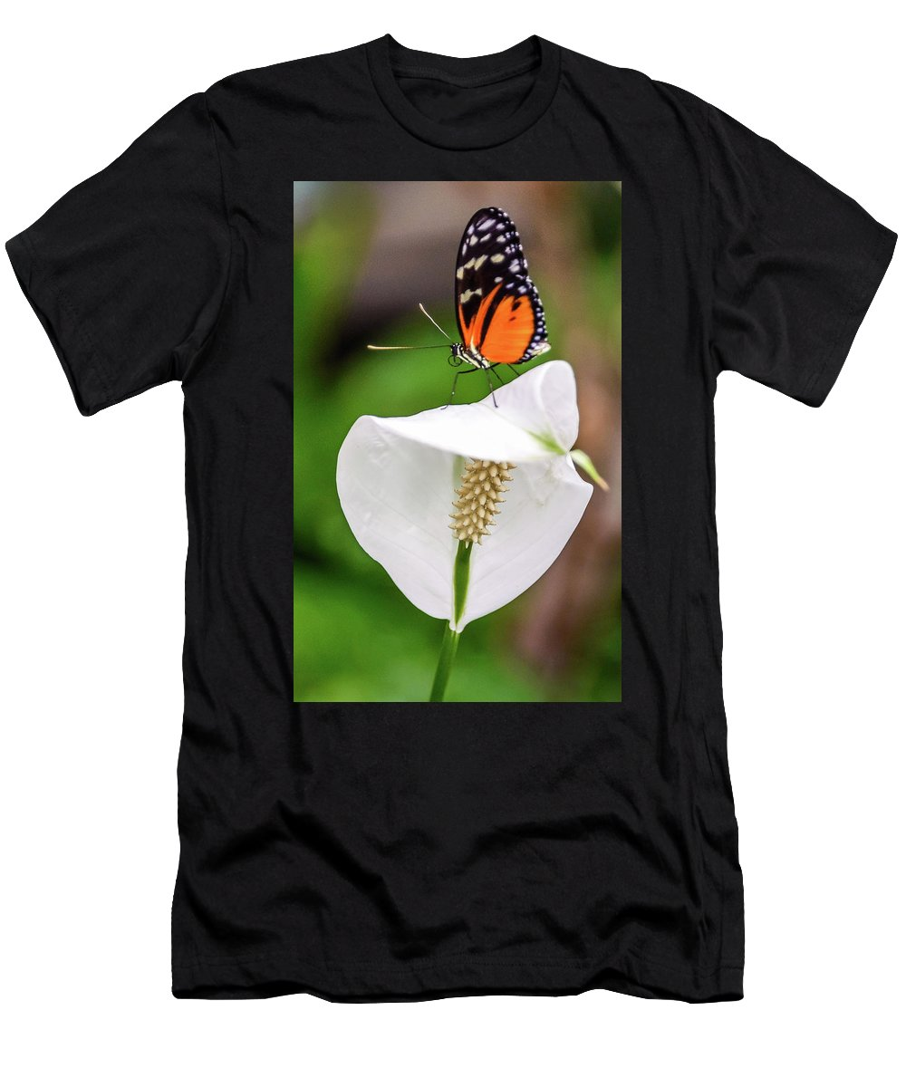 Butterfly Men's T-Shirt (Athletic Fit) featuring the photograph Perching Butterfly by Jerry Cahill