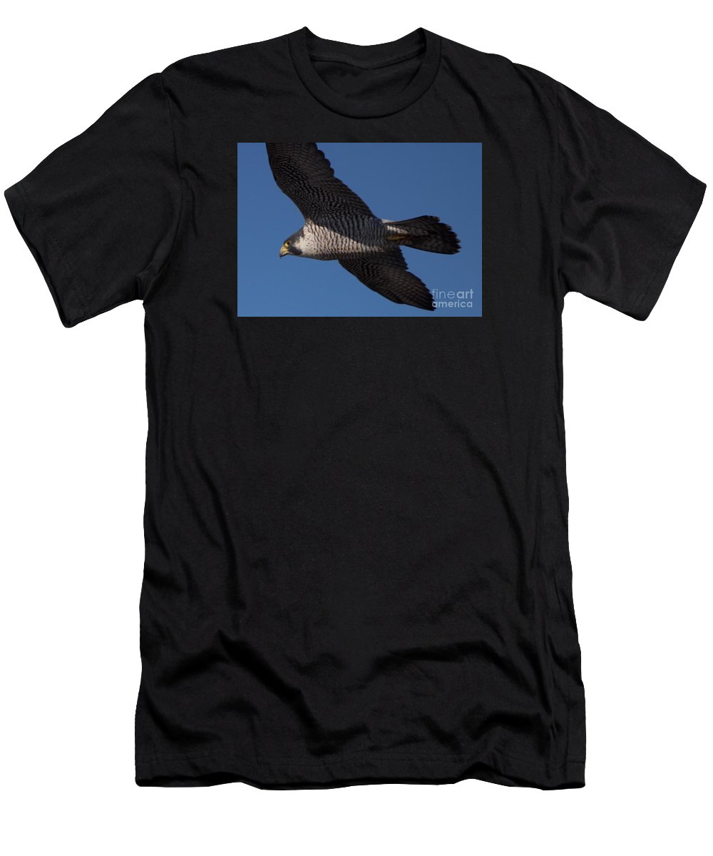 Peregrine Men's T-Shirt (Athletic Fit) featuring the photograph Peregrine 1 by Marta Robin Gaughen