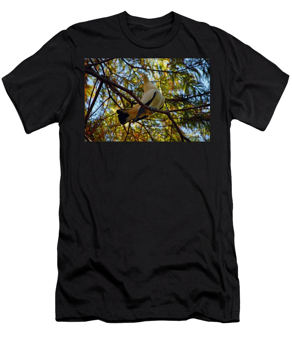 Pied Men's T-Shirt (Athletic Fit) featuring the photograph Pied Imperial Pigeon by Robert Meanor
