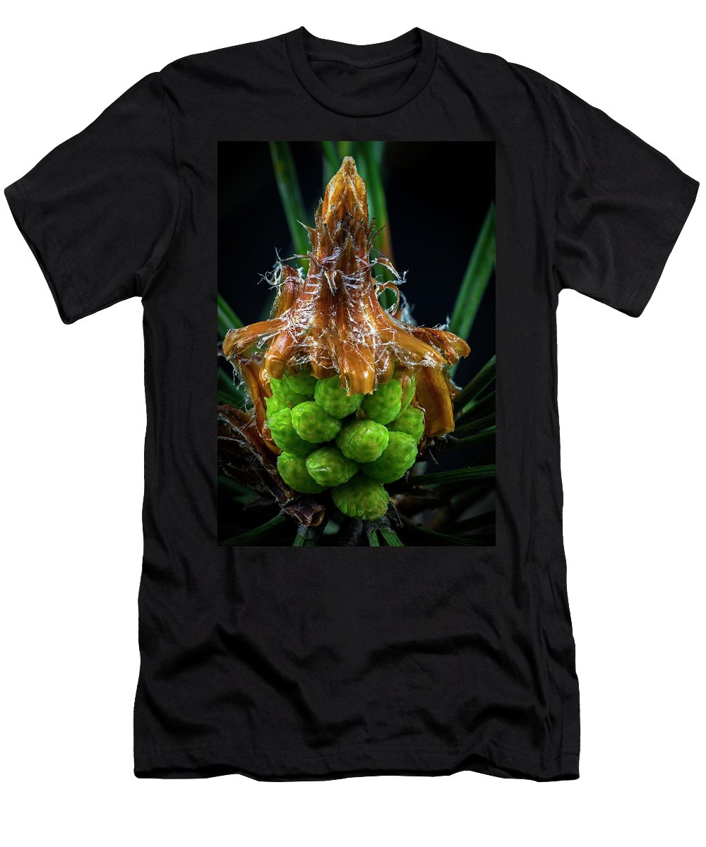 Tree Men's T-Shirt (Athletic Fit) featuring the photograph Pine Cone Focus Stack by Robert Storost