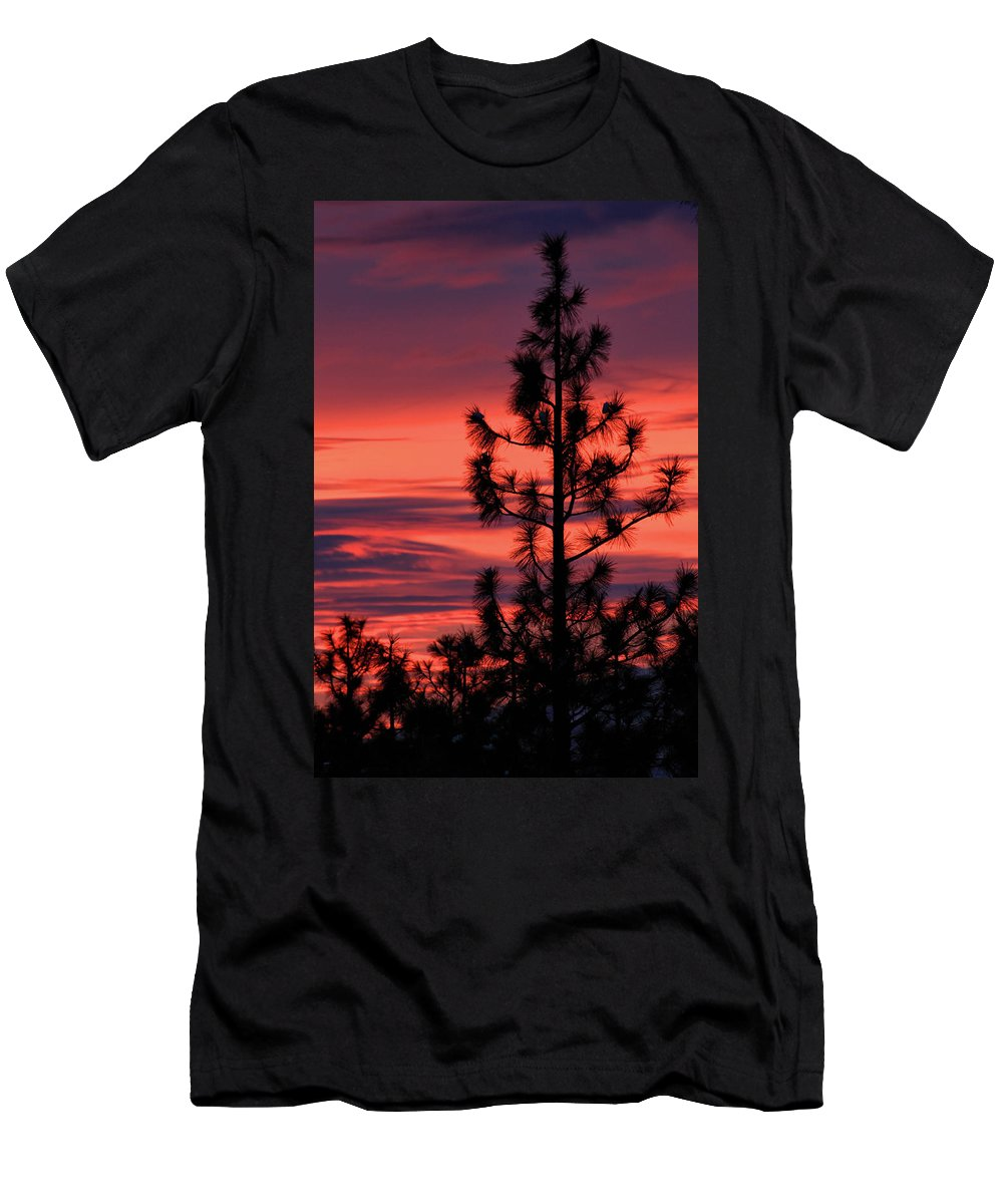 Branches Men's T-Shirt (Athletic Fit) featuring the photograph Pine Tree Sunrise by James Eddy