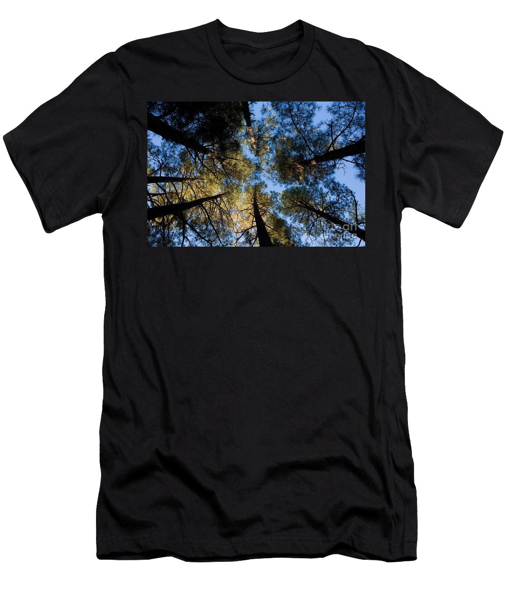 Pine Trees Men's T-Shirt (Athletic Fit) featuring the photograph Pine Trees Near Ruidoso Nm by Matt Suess
