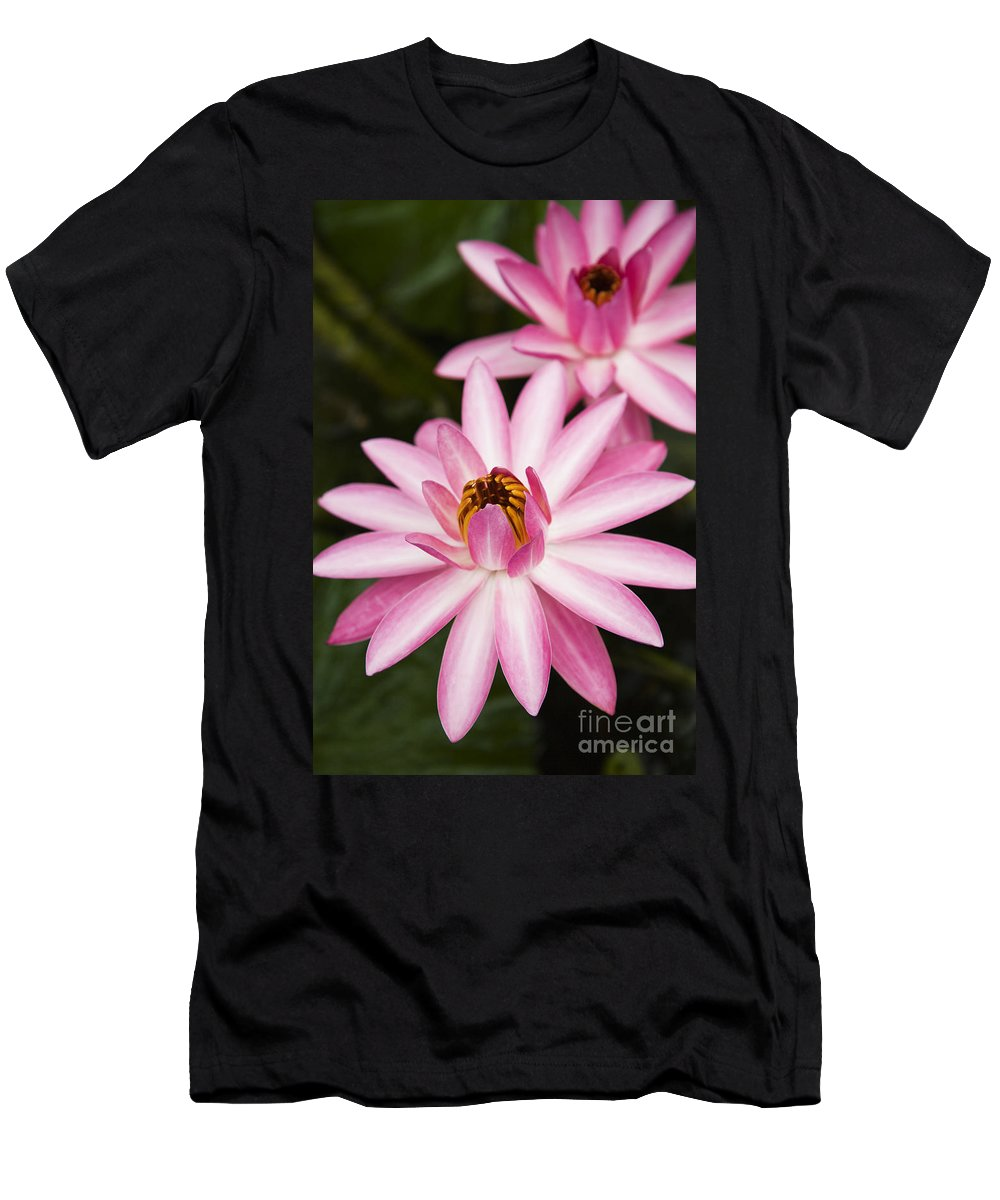 Afternoon Men's T-Shirt (Athletic Fit) featuring the photograph Pink Lotus Blossoms by Dana Edmunds - Printscapes