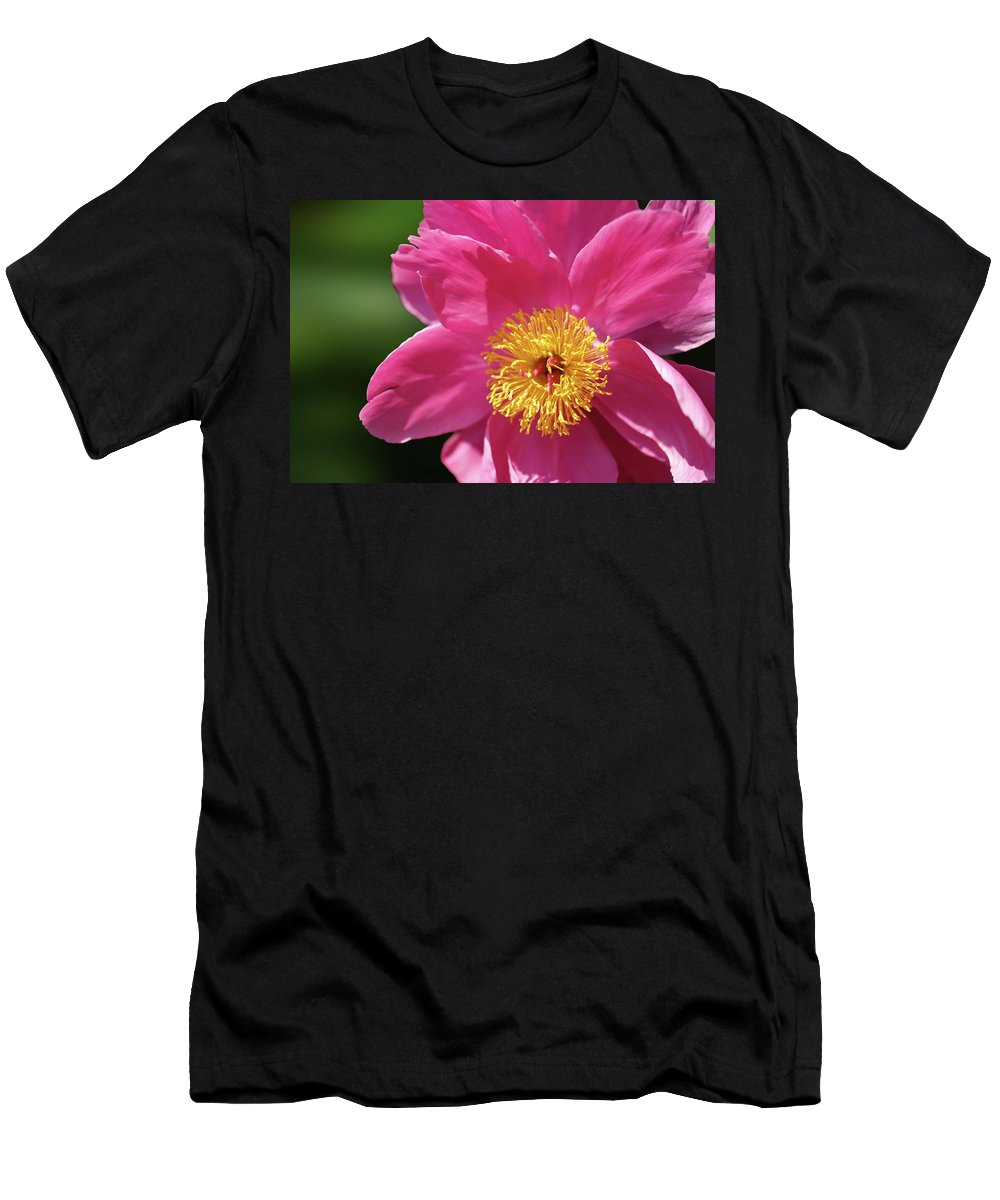 Peony Men's T-Shirt (Athletic Fit) featuring the photograph Pink Single Peony by Nancy Aurand-Humpf
