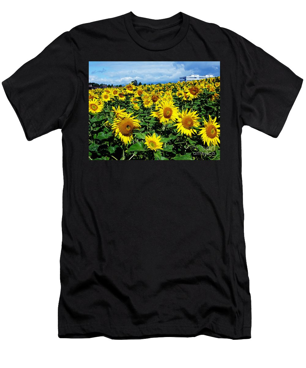 Sunflowers Men's T-Shirt (Athletic Fit) featuring the photograph Pleasant Warmth by Jeff Barrett