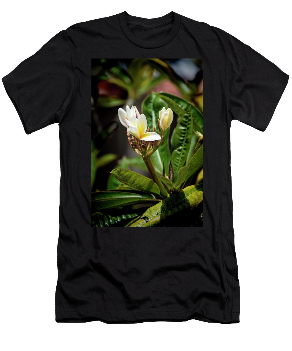 Plumeria Men's T-Shirt (Athletic Fit) featuring the photograph Plumeria At Balboa Park by Kenneth Roberts