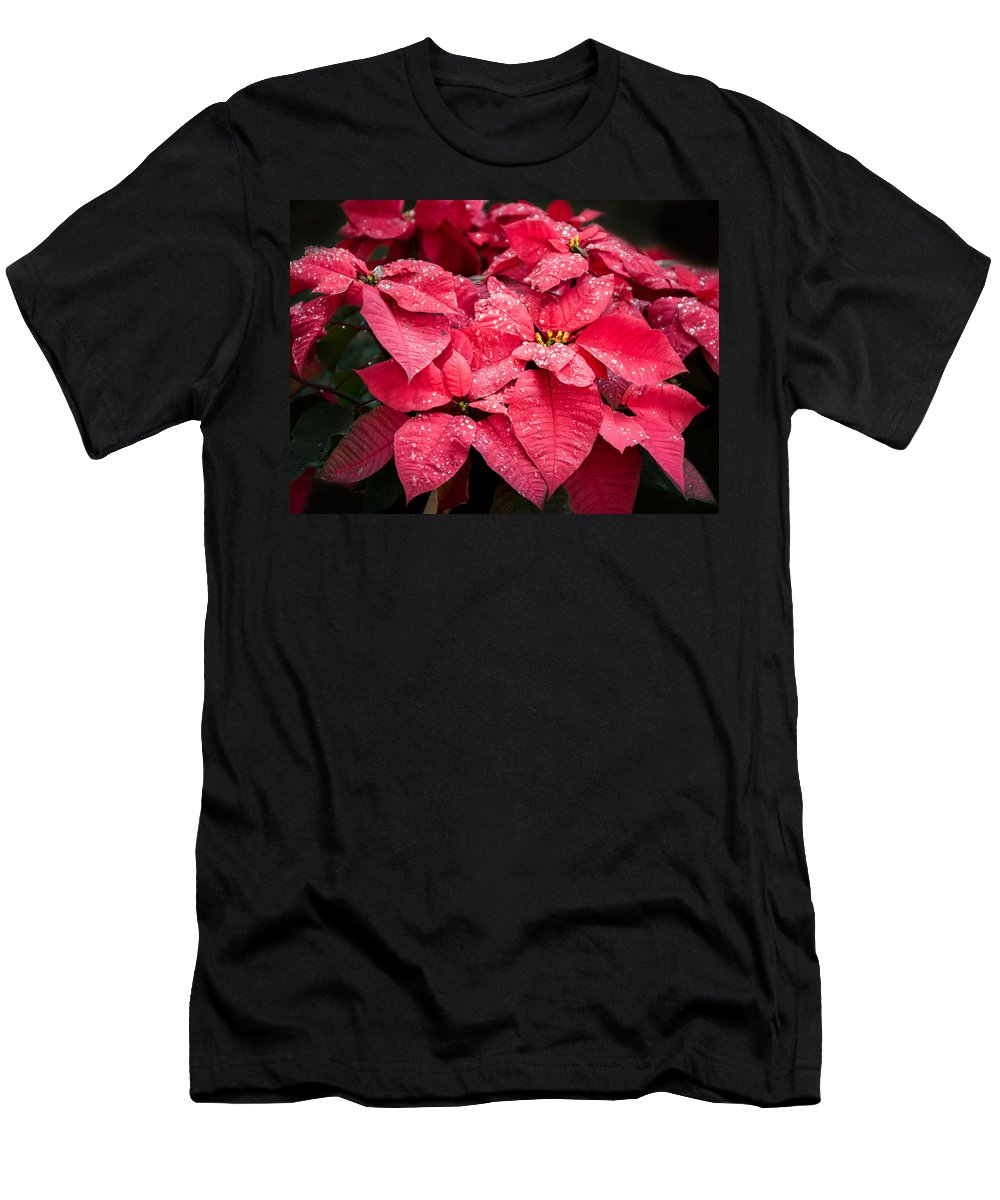 Poinsettia Men's T-Shirt (Athletic Fit) featuring the photograph Poinsettia Morning Dew by Zina Stromberg