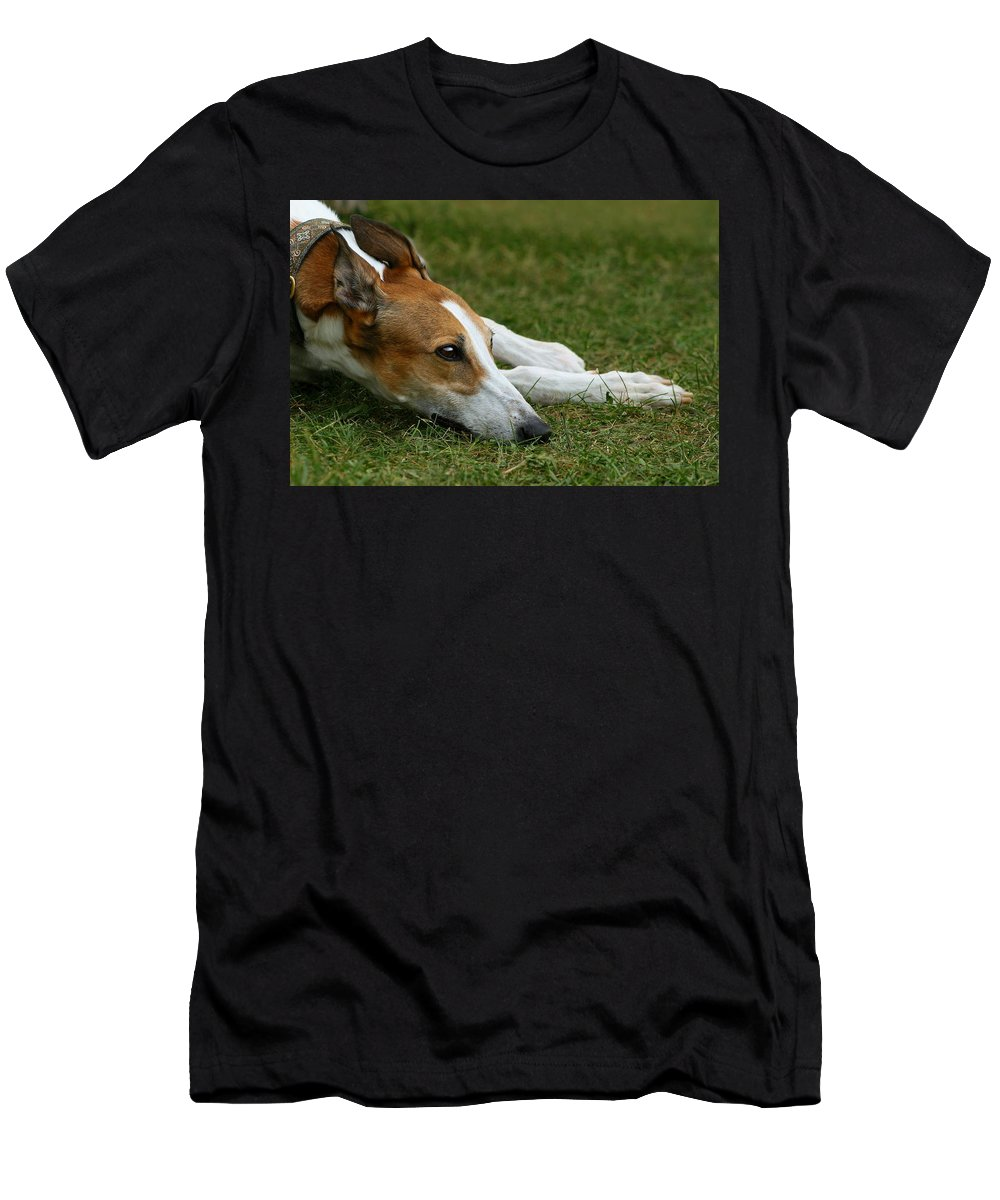 Editorial Men's T-Shirt (Athletic Fit) featuring the photograph Portrait Of A Greyhound - Soulful by Angela Rath