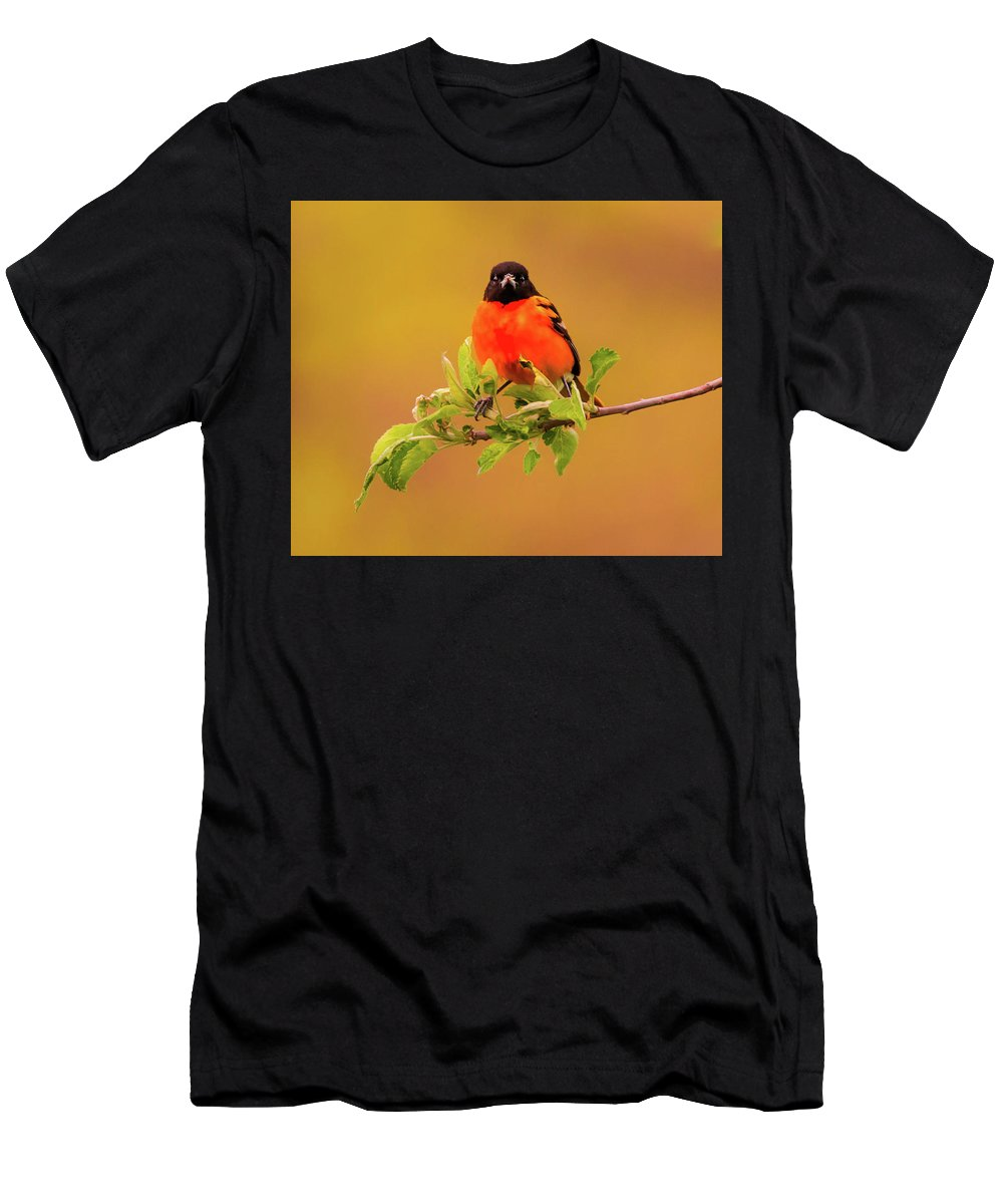 Aviary Men's T-Shirt (Athletic Fit) featuring the photograph Portrait Of An Oriole by Heather Hubbard