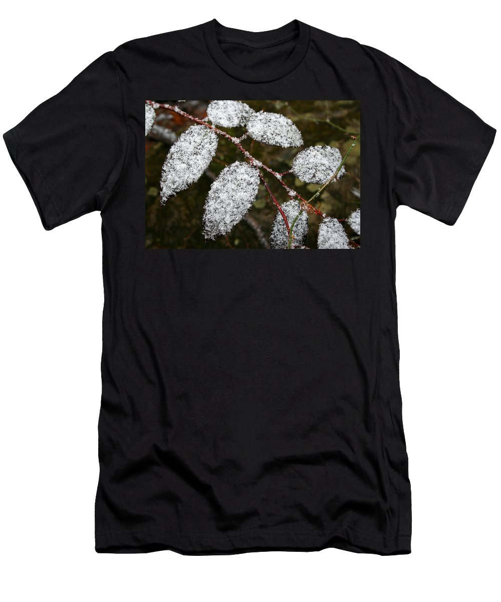 Winter Season Cold Snow Tree Branch Leaf Leaves White Green Frosted Powder Men's T-Shirt (Athletic Fit) featuring the photograph Powdered by Andrei Shliakhau