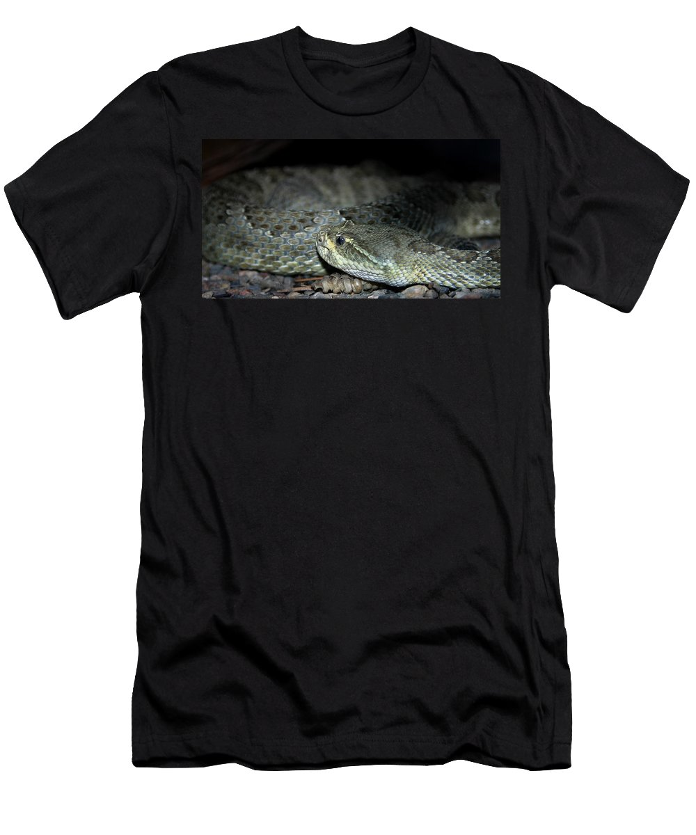 Snake Men's T-Shirt (Athletic Fit) featuring the photograph Prarie Rattle Snake by Anthony Jones