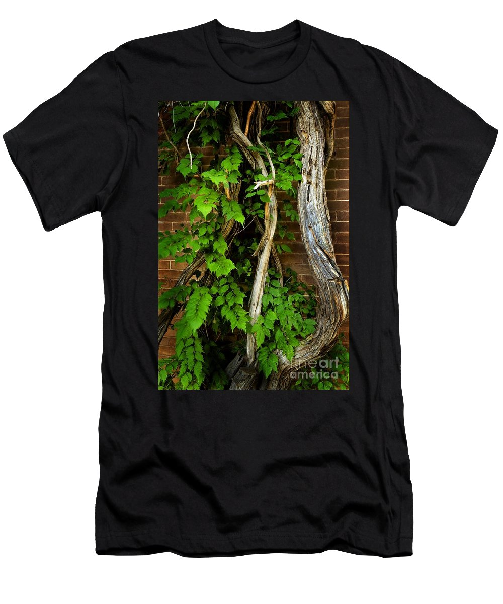 Preston Castle Men's T-Shirt (Athletic Fit) featuring the photograph Preston Wall Vine by Norman Andrus