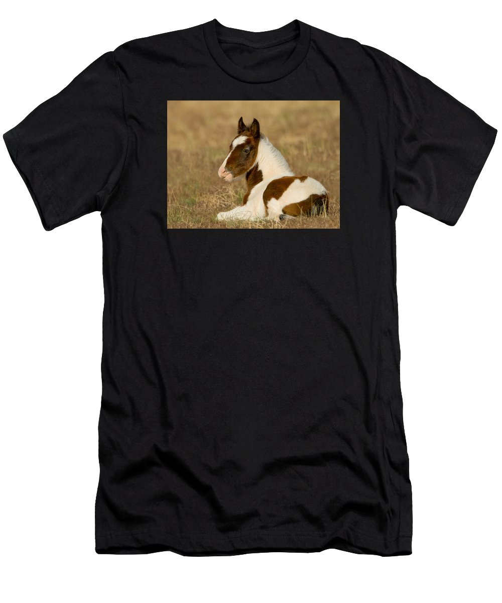 Wild Horse Men's T-Shirt (Athletic Fit) featuring the photograph Pretty Boy by Kent Keller