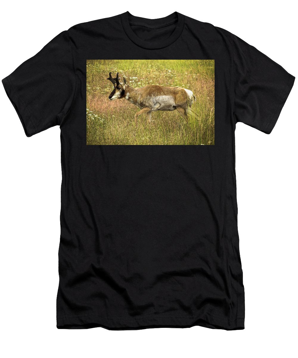 Pronghorn Antelope Men's T-Shirt (Athletic Fit) featuring the photograph Pronghorn Antelope by Amy Sorvillo