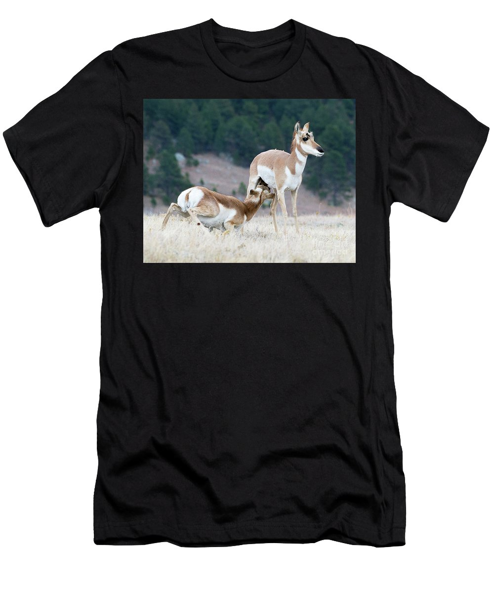 Mammal Men's T-Shirt (Athletic Fit) featuring the photograph Pronghorn Feeding by Dennis Hammer