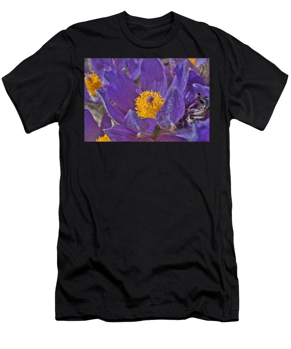 Pasqueflower Men's T-Shirt (Athletic Fit) featuring the photograph Purple And Gold by Cathy Mahnke