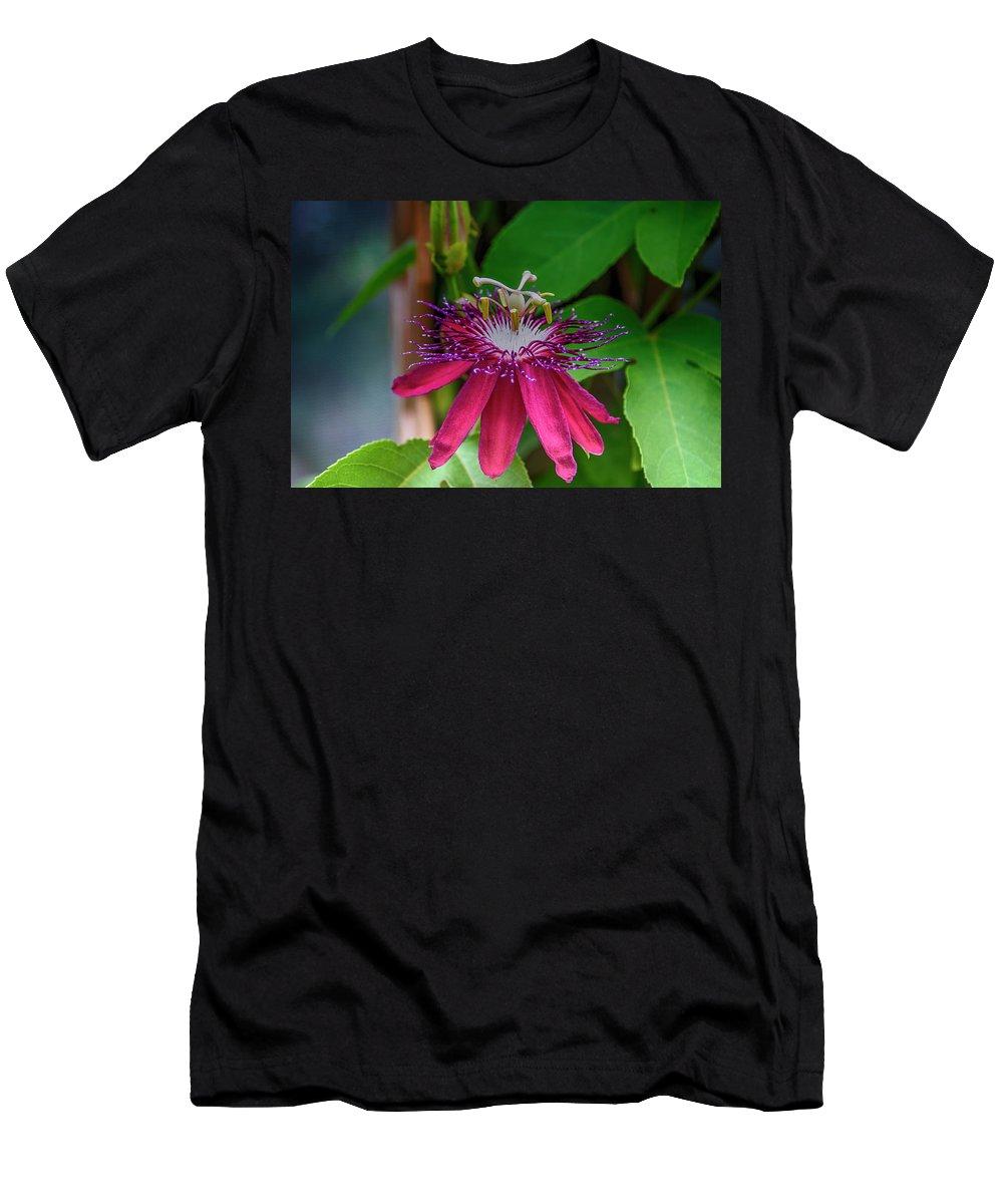 Purple Passion Flower Plant Fauna Don Columbus Photography Naples Florida Men's T-Shirt (Athletic Fit) featuring the photograph Purple Passion by Don Columbus