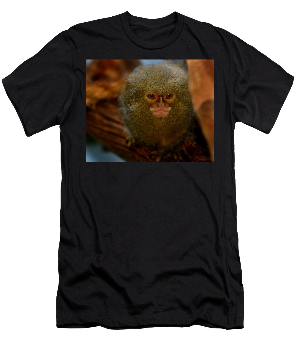 Pygmy Marmoset Men's T-Shirt (Athletic Fit) featuring the photograph Pygmy Marmoset by Anthony Jones