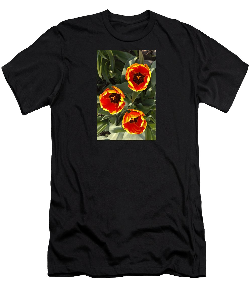 Tulips Men's T-Shirt (Athletic Fit) featuring the photograph Red And Yellow Tulip Trio  Spring Indiana by Rory Cubel