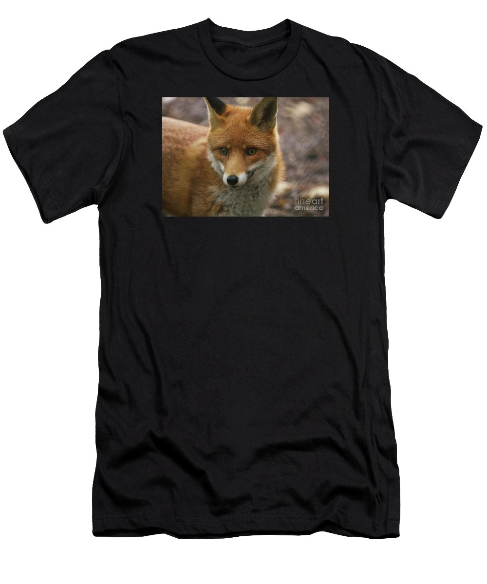 Animals Men's T-Shirt (Athletic Fit) featuring the photograph Red Fox by Franco De Luca Calce Wildlife Photographer