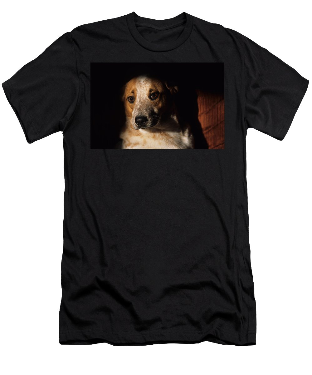 Animal Men's T-Shirt (Athletic Fit) featuring the photograph Red Heeler Portrait by One Rude Dawg Orcutt