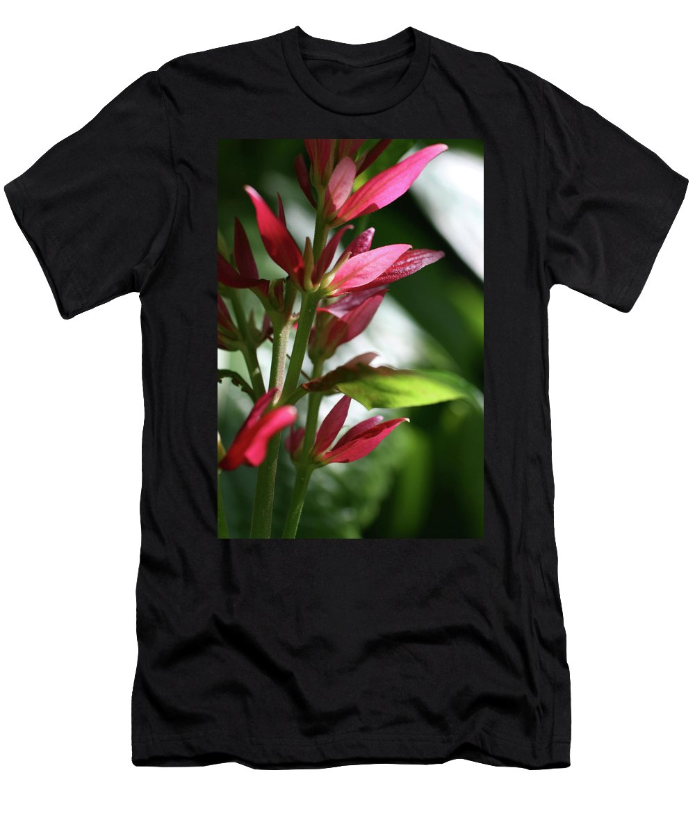 Photo Photography Close-up Flower Plant Green Red Pink Men's T-Shirt (Athletic Fit) featuring the photograph Red Leaves by Christina Geiger