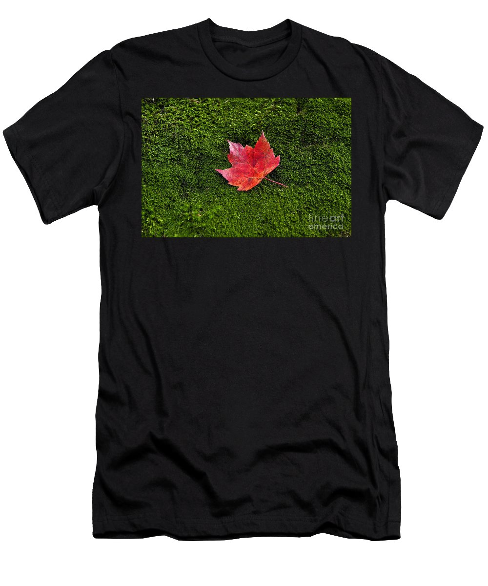 Bryophyta Men's T-Shirt (Athletic Fit) featuring the photograph Red Maple Leaf by John Greim