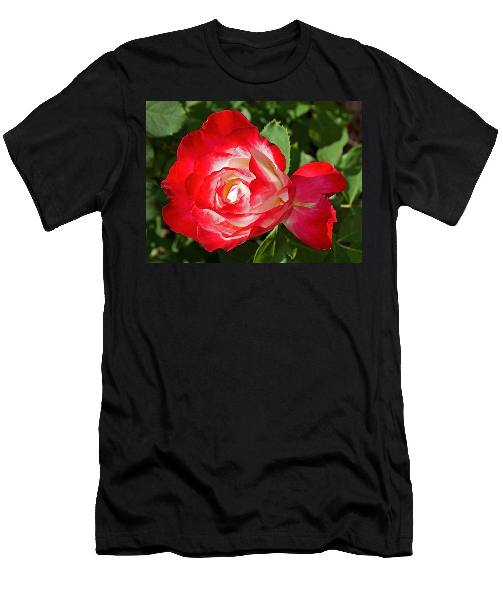 Red Rose And A Sidecar At Pilgrim Place In Claremont Men's T-Shirt (Athletic Fit) featuring the photograph Red Rose And A Sidecar At Pilgrim Place In Claremont-california by Ruth Hager