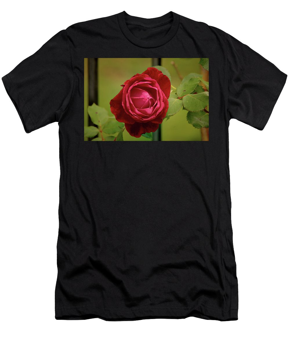 Floral Men's T-Shirt (Athletic Fit) featuring the photograph Red Rose by John Straton