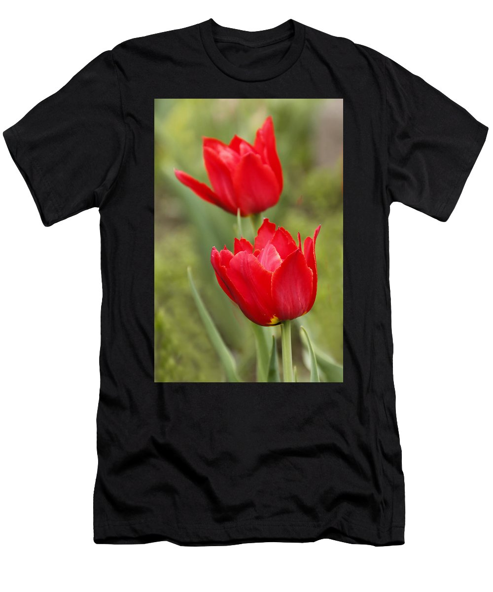 George Westermak Men's T-Shirt (Athletic Fit) featuring the photograph Red Tulips In A Meadow Closeup Sunny Spring Day by George Westermak