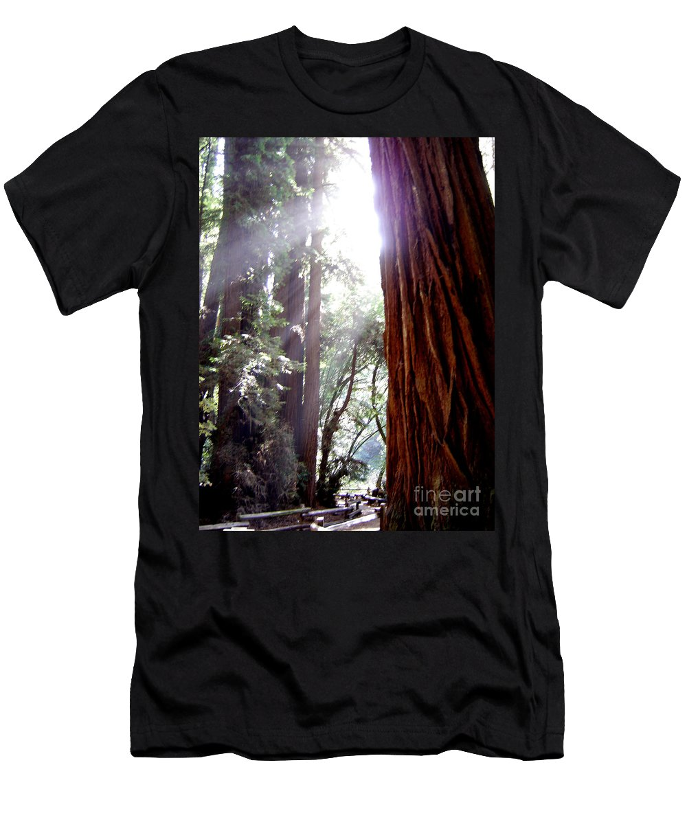 Redwoods Men's T-Shirt (Athletic Fit) featuring the photograph Redwood Sunlight by Mary Rogers