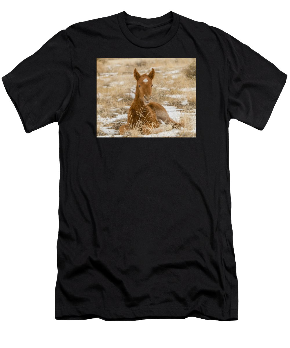 Wild Horse Men's T-Shirt (Athletic Fit) featuring the photograph Resting Colt by Kent Keller