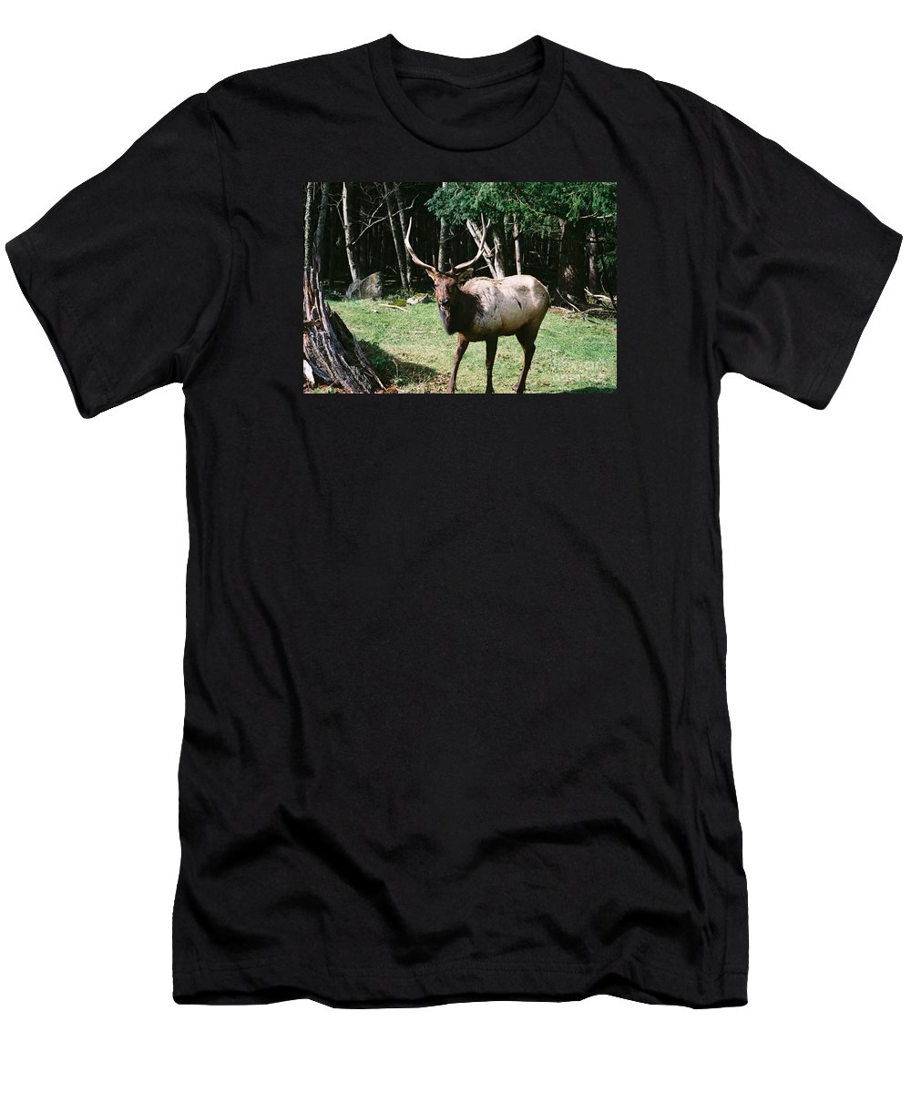 Wildlife Men's T-Shirt (Athletic Fit) featuring the photograph Roosevelt Elk by John Huntsman
