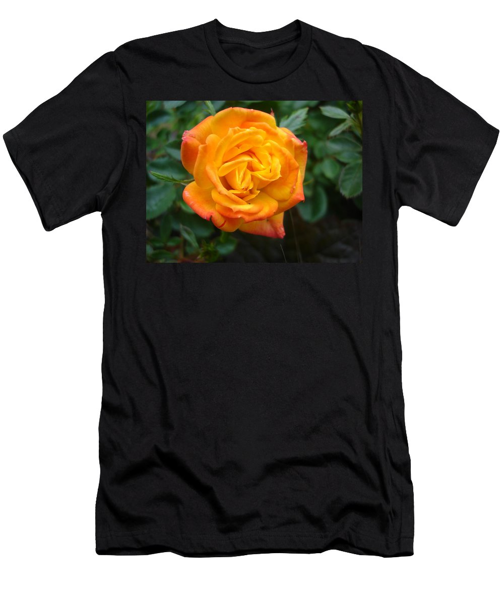 Rose Men's T-Shirt (Athletic Fit) featuring the photograph Rose - Irish Eyes by Susan Baker