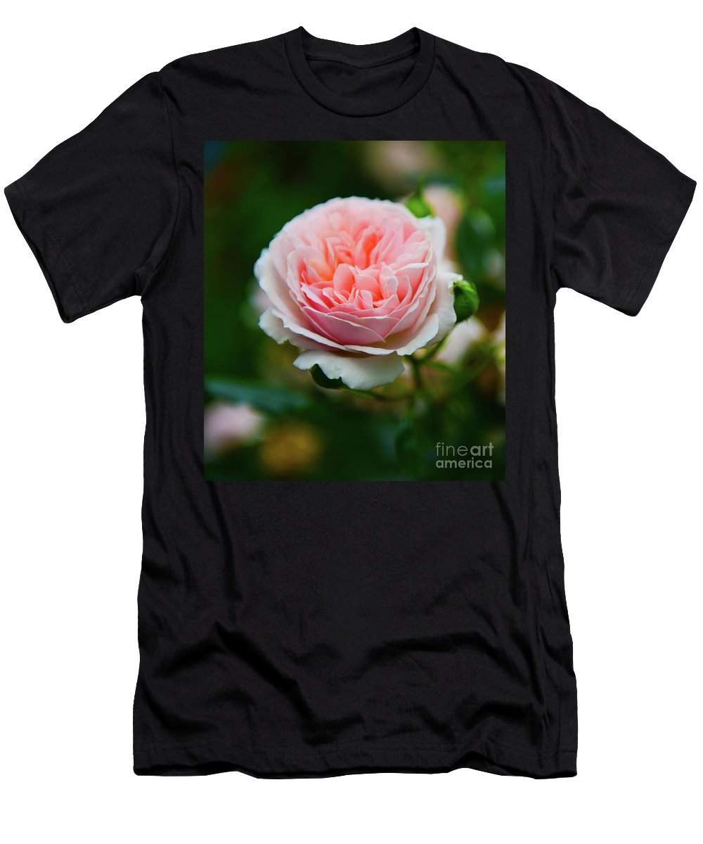 Rose Men's T-Shirt (Athletic Fit) featuring the photograph Rose 3 by Kevin Williams