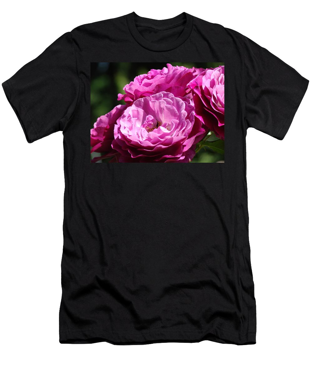 Rose Men's T-Shirt (Athletic Fit) featuring the photograph Rose Pink Purple Roses Flowers 1 Rose Garden Sunlit Flowers Baslee Troutman by Baslee Troutman