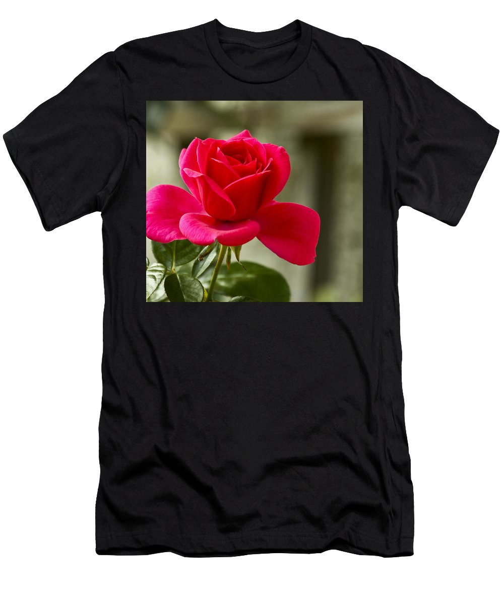 Rose Men's T-Shirt (Athletic Fit) featuring the photograph Red Rose Wall Art Print by Carol F Austin