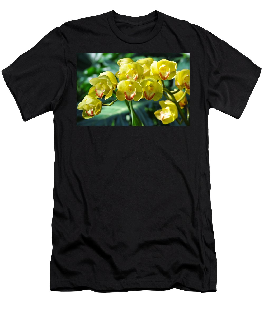 Balboa Park Men's T-Shirt (Athletic Fit) featuring the photograph San Diego Yellow Orchids by Kyle Hanson