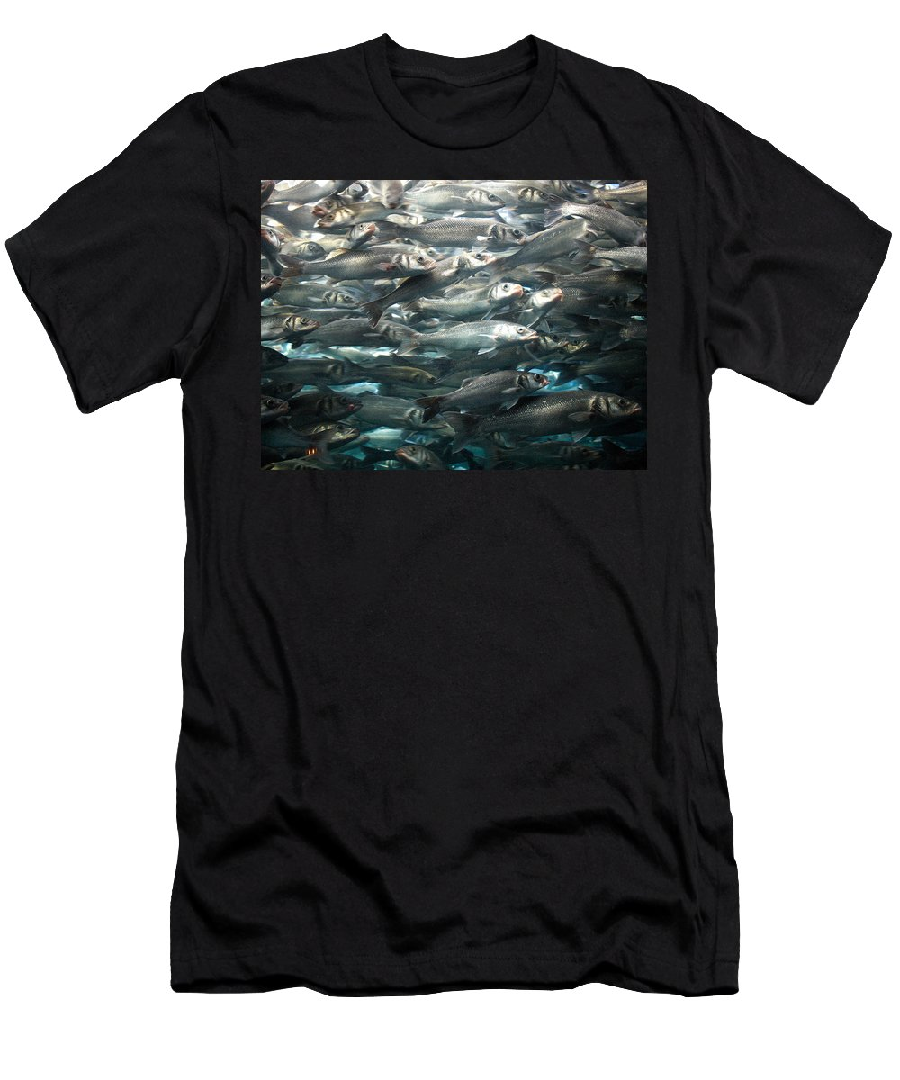 Loro Park Men's T-Shirt (Athletic Fit) featuring the photograph Sardines 1 by Jouko Lehto
