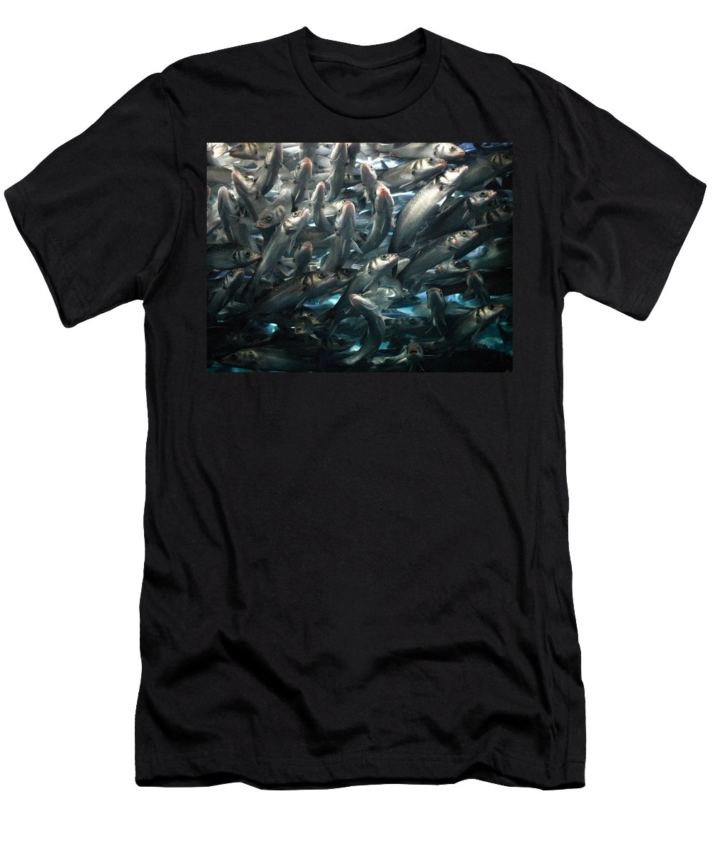 Loro Park Men's T-Shirt (Athletic Fit) featuring the photograph Sardines 2 by Jouko Lehto