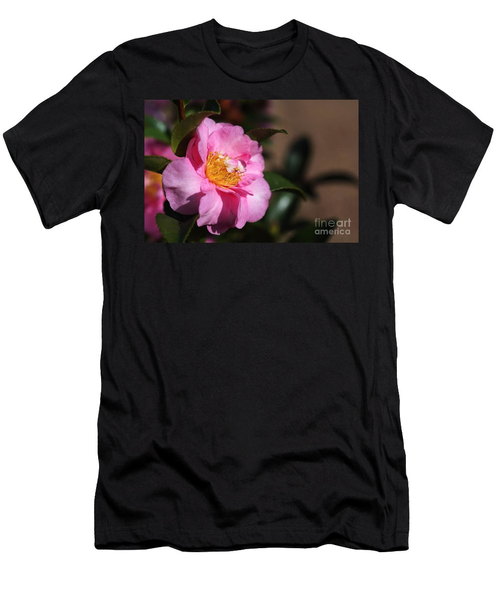 Sasanqua Camellias Men's T-Shirt (Athletic Fit) featuring the photograph Sasanqua Camellia by Joy Watson
