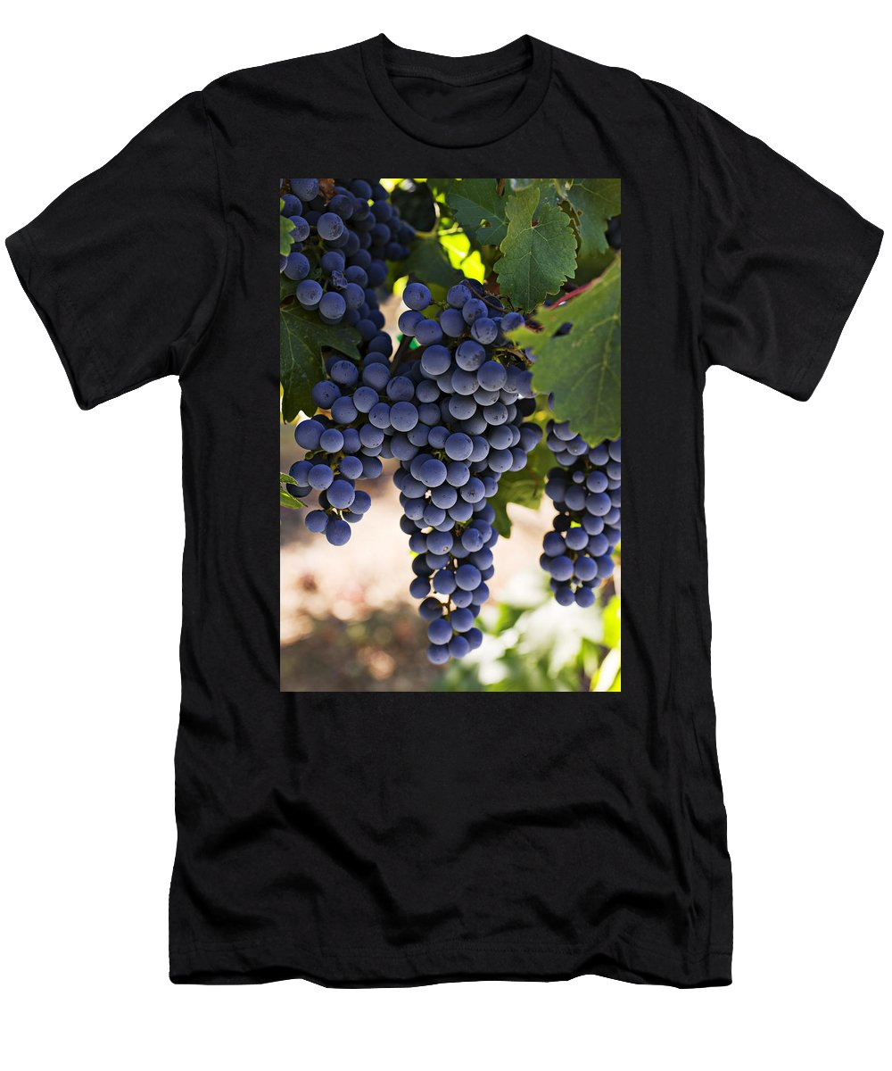 Sauvignon Men's T-Shirt (Athletic Fit) featuring the photograph Sauvignon Grapes by Garry Gay
