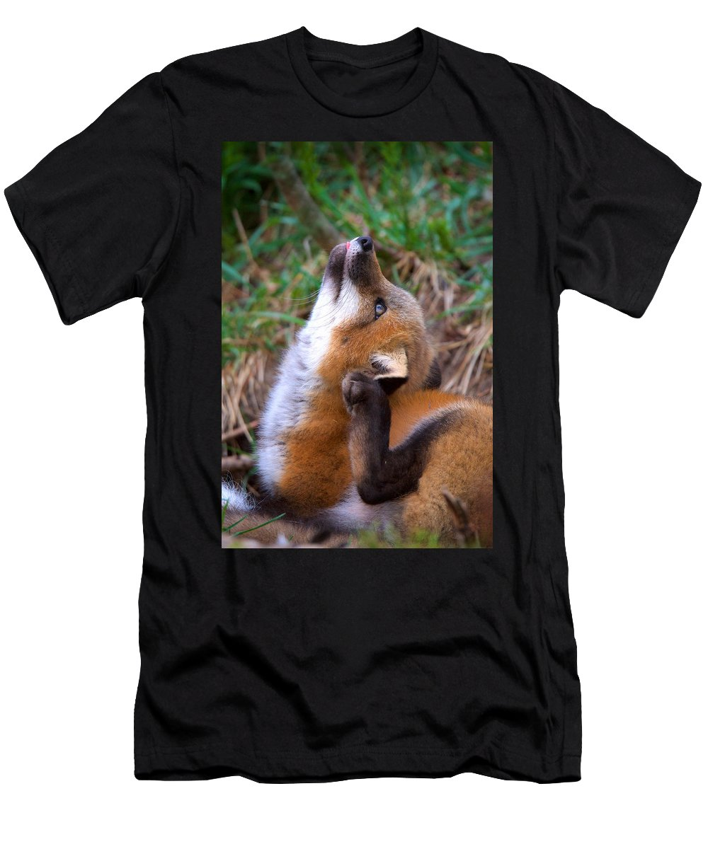 Red Fox Kit Men's T-Shirt (Athletic Fit) featuring the photograph Scratchin With Distraction by Heather Quinn
