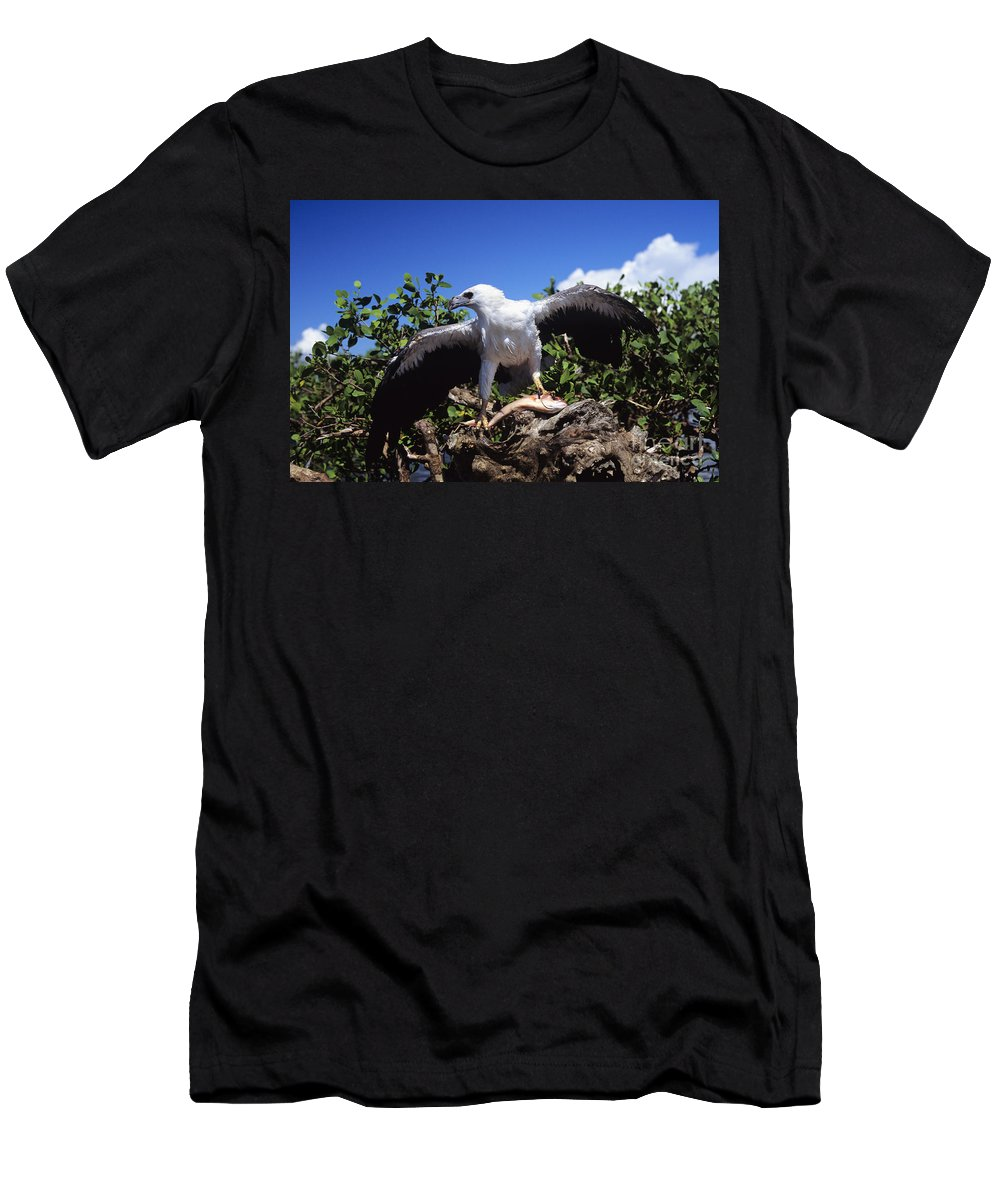 Animal Art Men's T-Shirt (Athletic Fit) featuring the photograph Sea Eagle by Dave Fleetham - Printscapes