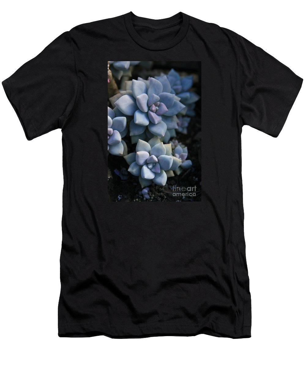 Aloha Men's T-Shirt (Athletic Fit) featuring the photograph Sedum Clavatum Beautiful Cultivated Stonecrop by Sharon Mau