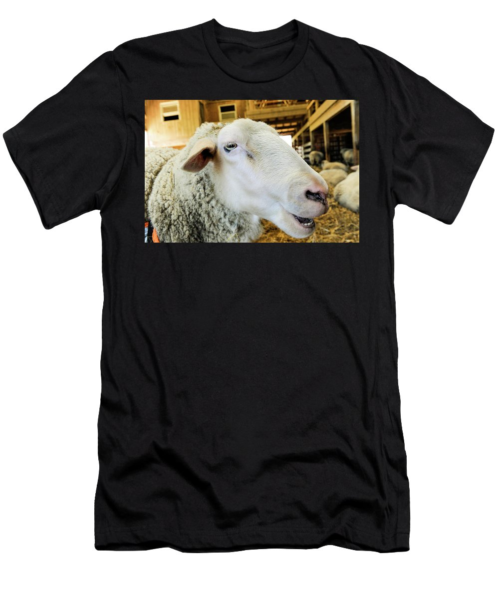Sheep Men's T-Shirt (Athletic Fit) featuring the photograph Sheep 2 by William Kauffman