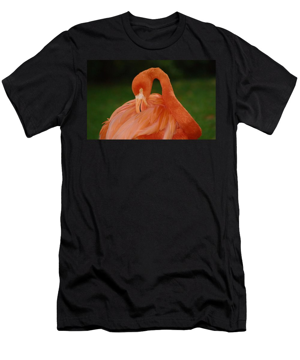 Flamingo Men's T-Shirt (Athletic Fit) featuring the photograph shy by Gaby Swanson