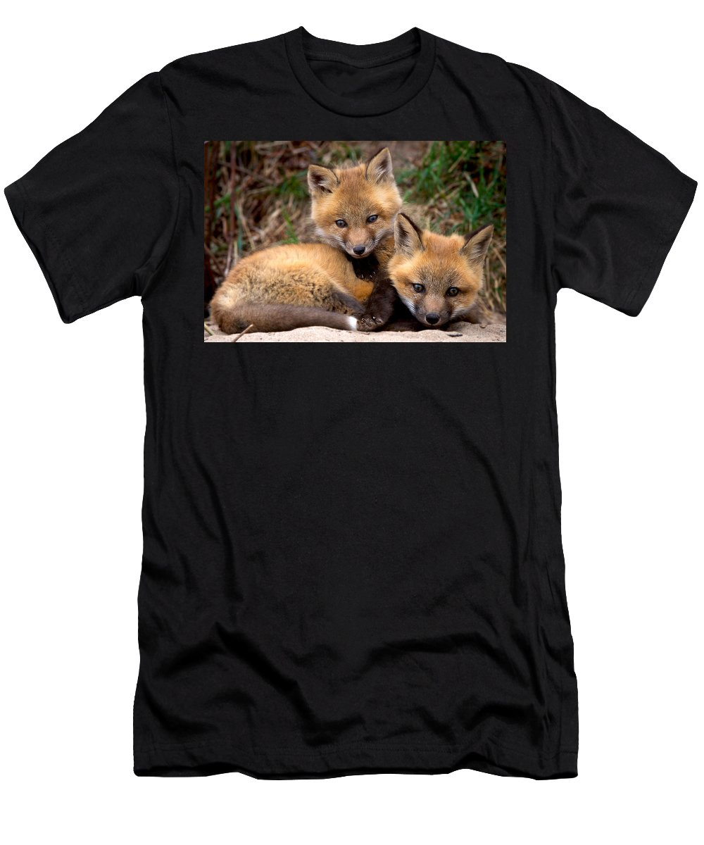 Red Fox Kit Men's T-Shirt (Athletic Fit) featuring the photograph Siblings by Heather Quinn