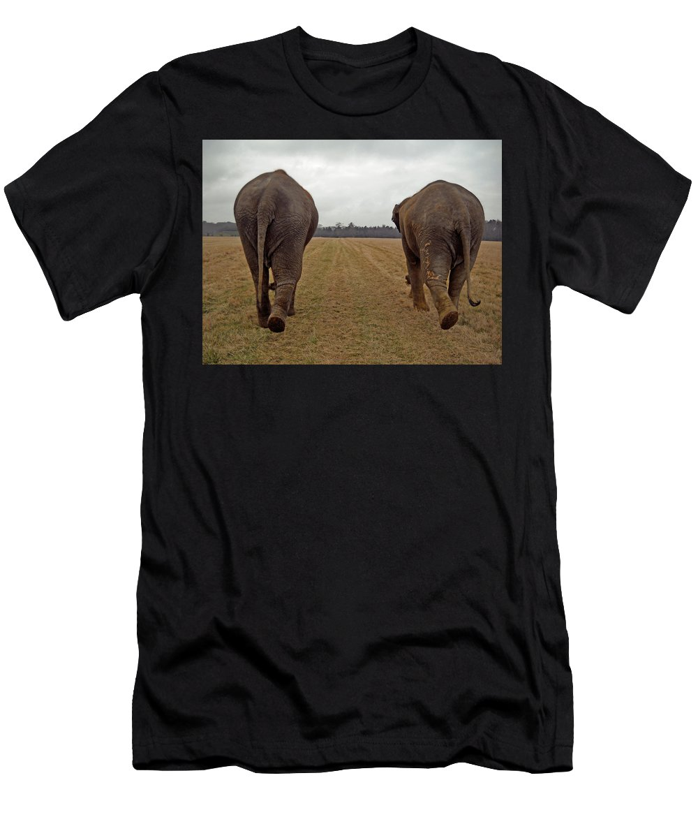Asian Elephant Men's T-Shirt (Athletic Fit) featuring the photograph Sisters by Julia Raddatz